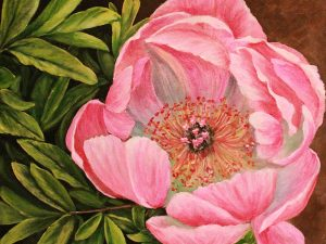 Wild Pink Rose by Sandra Marshall