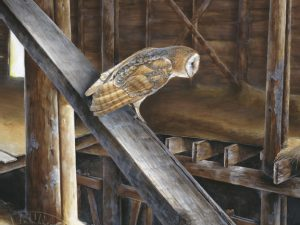 Barn Owl 8x10 mini by Laura Levitsky