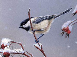 Winter Chickadees Pair by Laura Levitsky