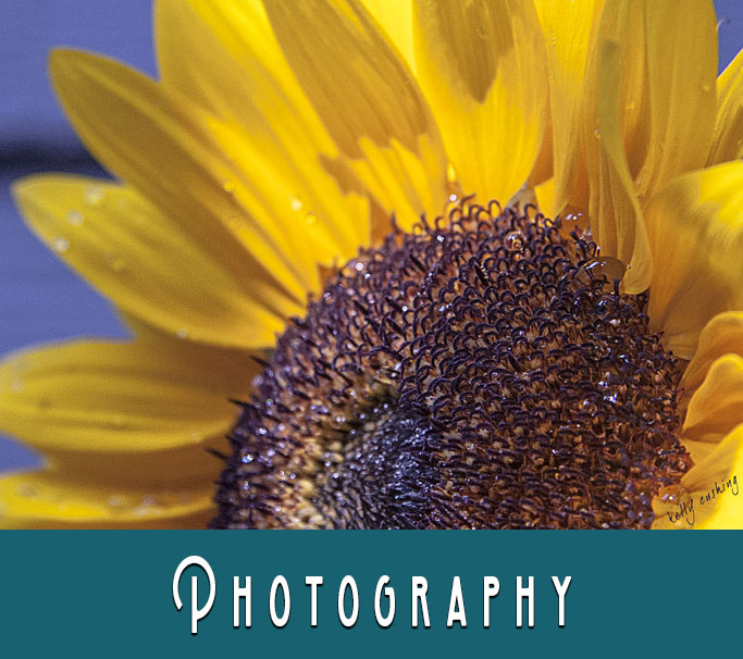 Photography at the Art Hive Collective