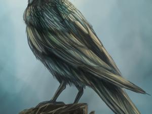 Crow by Tobias Vyseri