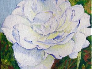 White Rose by Kathy Nay