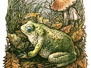 Forest Toad by Eric Hotz
