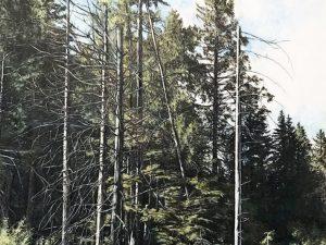 Iron Mountain Cedars by Eric Hotz
