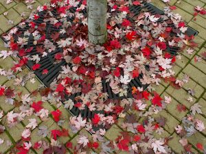 A Chaos of Leaves by Vickie Legere
